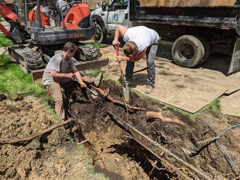 Sawing off tree roots by sewer